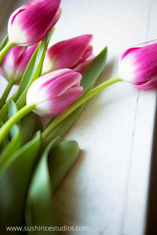 study of tulips fine art flower photography fun and